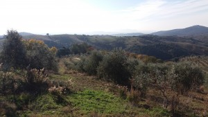 Anichino is a farm in the Maremma