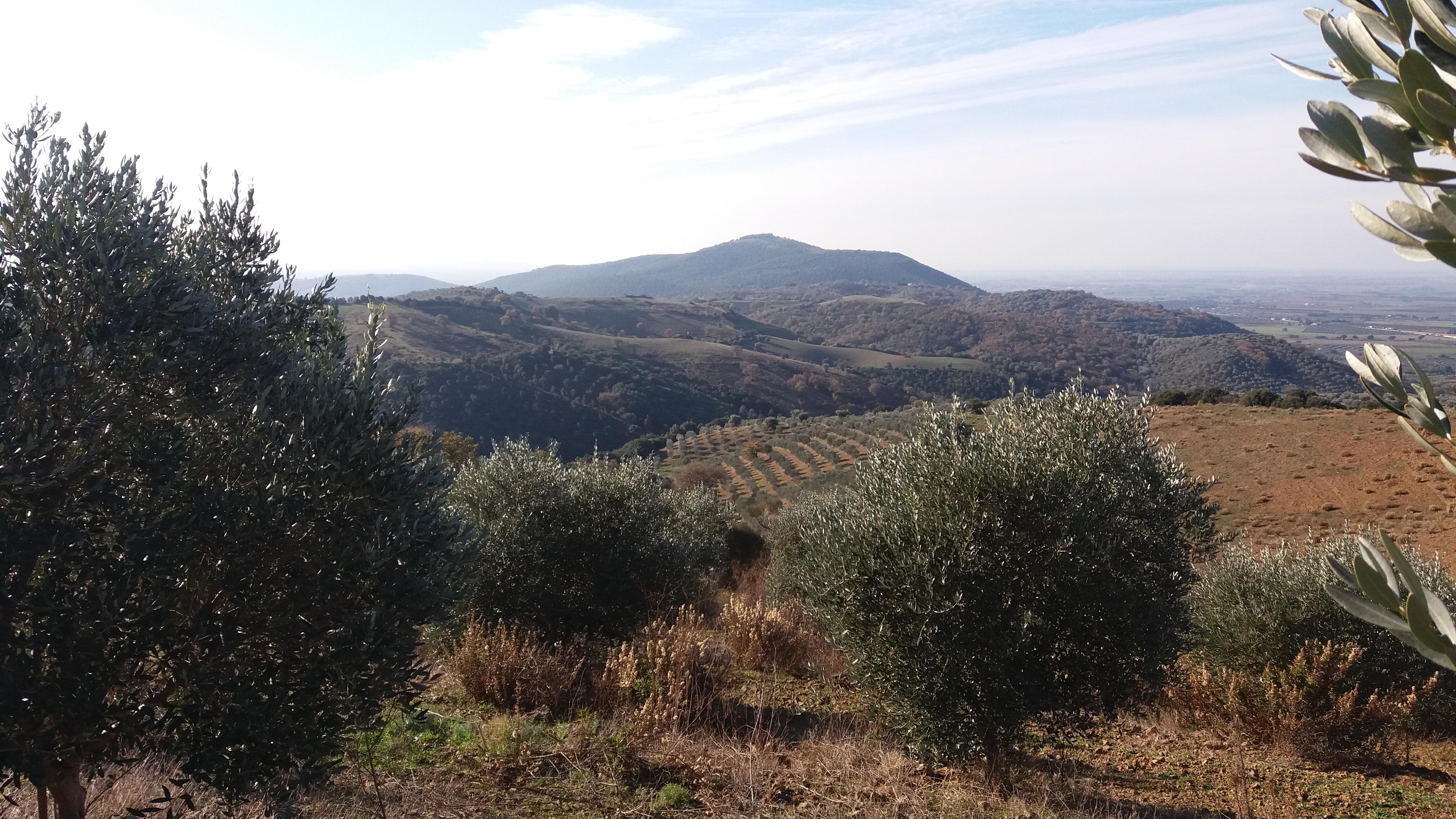 Uno scorcio dei nostri olivi