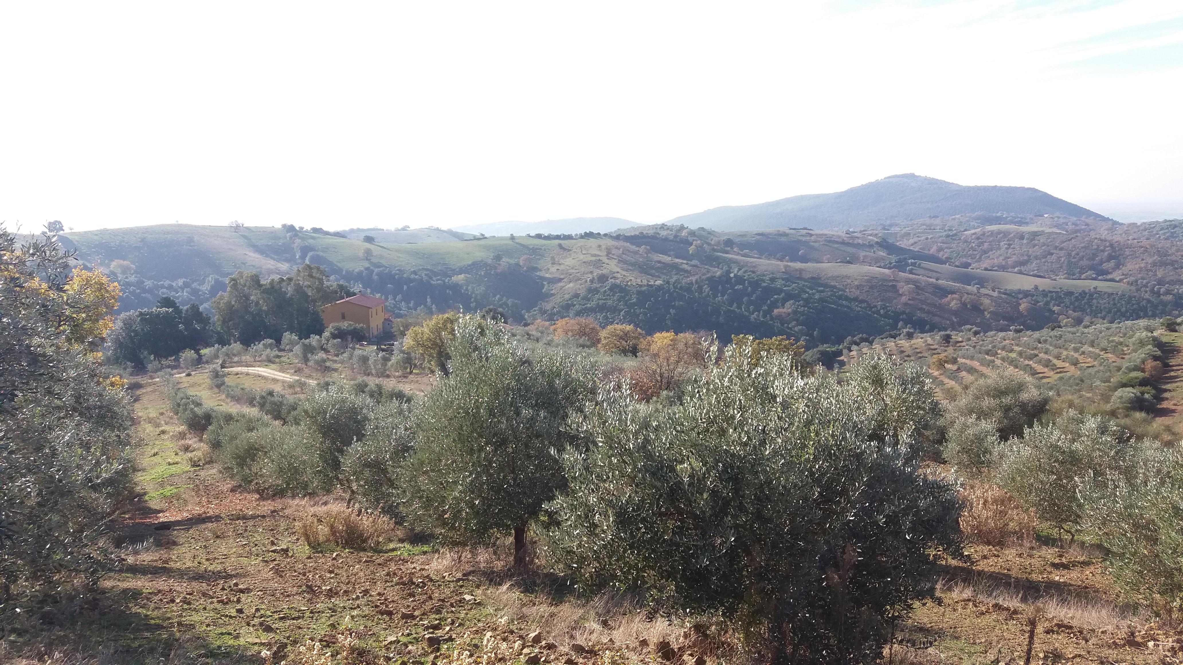 Panorama dalla nostra oliveta
